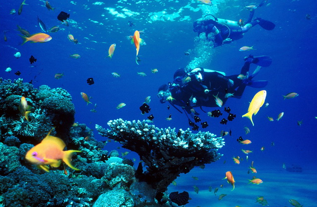 Puerto Vallarta diving spots in Mexico review